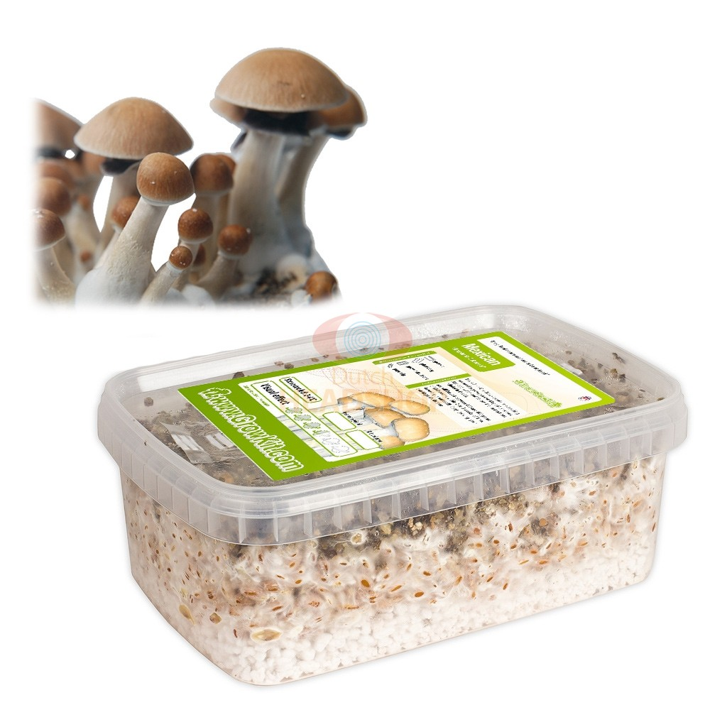 Zauberpilze Zucht-Set Mexicana (Ready-to-Grow Growkit)