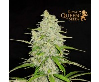 Hulkberry (Royal Queen Seeds) 3 Samen