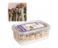 Magic Mushrooms Growkit McKennaii (Ready-to-Grow Growkit)