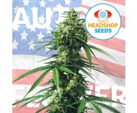 USA Autoflower Mix (Hausmarke) 5 Samen