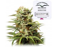 Auto White Widow (Dutch Passion) 3 Samen