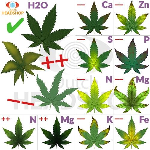 Welcher Cannabis-Dünger ist die Lösung