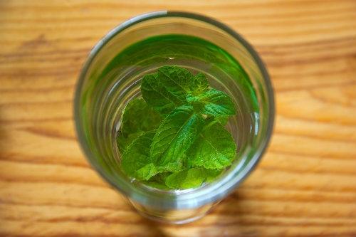 Trinken Salvia mit Wasser Dutch Headshop